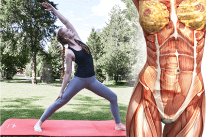 Der Core ist dein Zentrum, dass von deinen Bauchmuskeln und Rückenmuskeln gebildet wird.